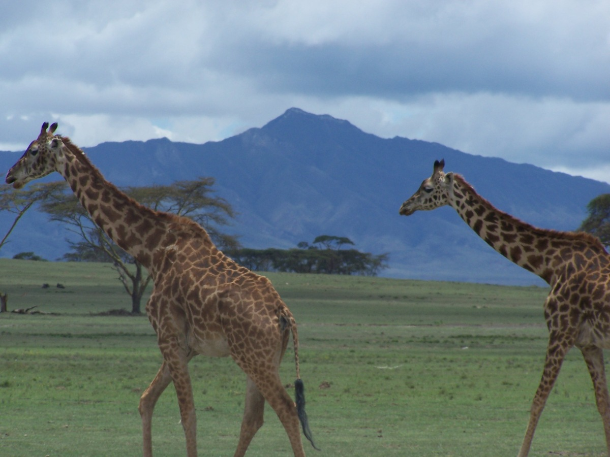 2 twigas with Mt. Longonot in the distance...